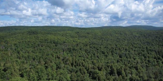 Grâce aux absorptions de CO2 des arbres de la forêt boréale, le Canada serait déjà en bonne voie pour devenir«carboneutre».