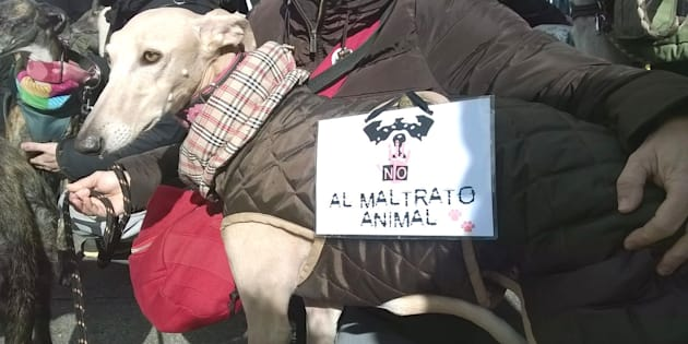 Un galgo con un cartel contra el maltrato animal, en una imagen de archivo.