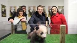Pour son anniversaire, Macron a rencontré le bébé panda du zoo de