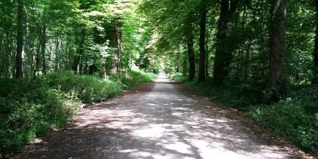 Une allée du bois de Vincennes.