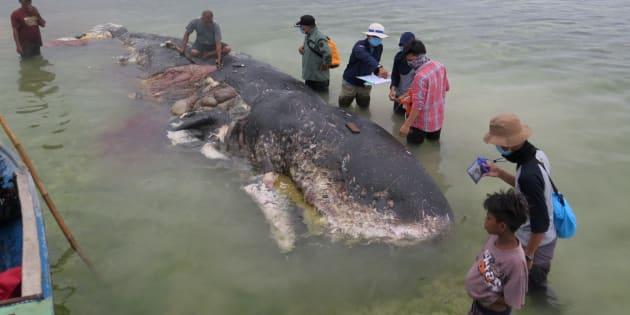 インドネシアで見つかったクジラ