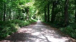 C'est aujourd'hui qu'ouvre la zone naturiste du bois de