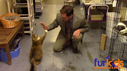 Animal Shelter's Hilarious Cat Commercial Is A Low-Budget