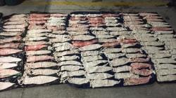Por qué el gobierno mexicano quiere legalizar la 'cocaína del