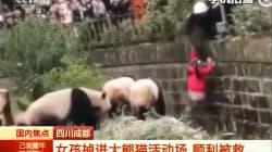 VIDEO Una niña cae dentro de la fosa de pandas en