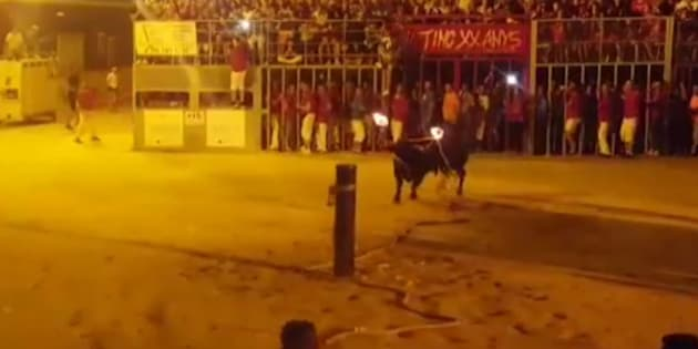 L'histoire de ce taureau mort après que ses cornes ont été enflammées indigne