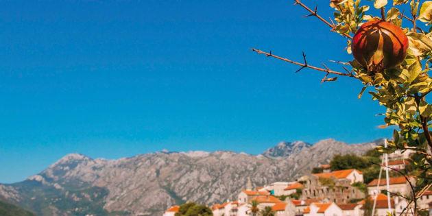 Una storia in Dalmazia, prima della guerra