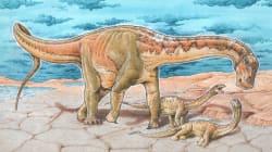 Une espèce de dinosaure herbivore géant découverte en