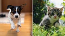 Inglaterra prohíbe a tiendas de mascotas vender cachorros y