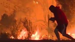 L'homme qui a sauvé le lapin des flammes de Californie ne lui a pas forcément rendu