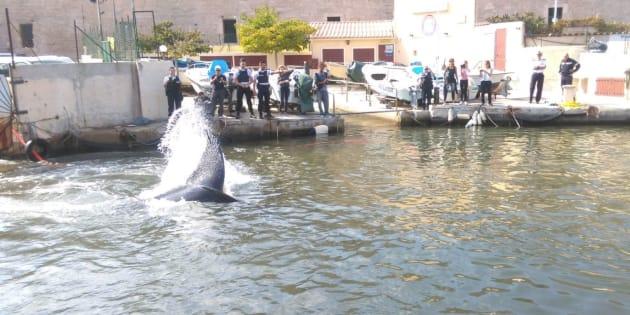 Une baleine coincée dans le port de Marseille, la police a live-tweeté le sauvetage
