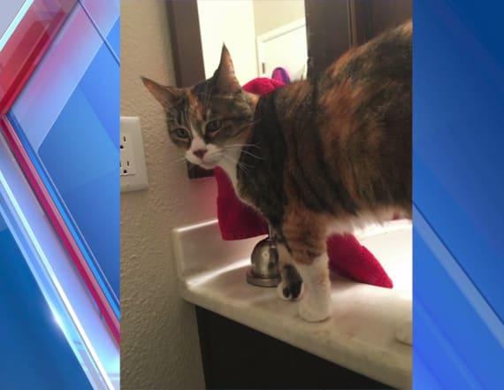 Cat's dismembered body found around neighborhood
