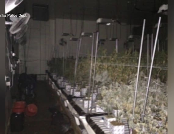 Telephone pole fire leads to weed grow operation