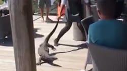 Une serveuse française fait sensation en dégageant un immense varan de son