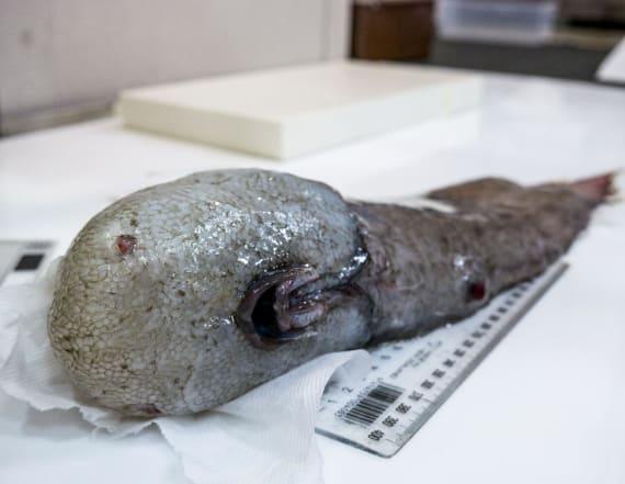 Bizarre creatures pulled from deepest ocean habitat