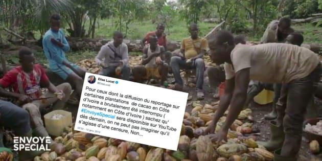 """L'émission """"Envoyé spécial"""" de ce 10 janvier a été interrompue, selon Elise Lucet, pendant la diffusion d'un reportage sur l'exploitation du cacao en Côte d'Ivoire."""