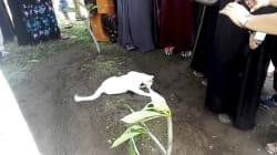 Amor animal: este gato se niega a abandonar la tumba de su