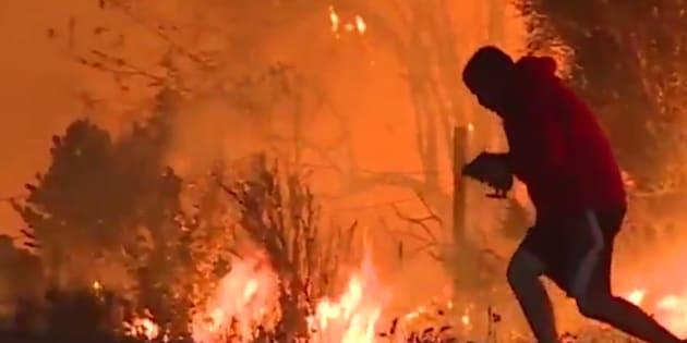 L'homme qui a sauvé le lapin des flammes de Californie ne lui a pas forcément rendu service