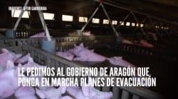 PACMA denuncia a quienes dejaron morir a los animales en la crecida del