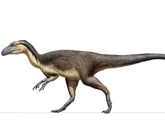 Fluffy dinosaurs lived at the South Pole, study says