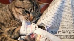 「新聞って、いる?」