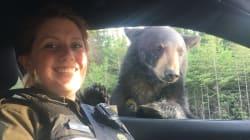 L'ours le plus populaire du Québec en ce