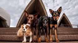 Tour canino por Sídney: 117 perros en 85 lugares de la ciudad más grande de