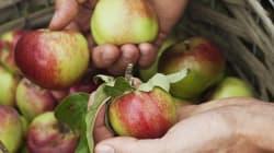 Comment enlever un maximum de pesticides de vos pommes, selon la