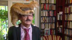📺 El gato de este experto decidió fijar su propia postura en