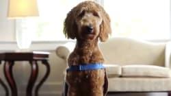 Lulu: la perra