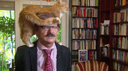 TV Expert's Cat Decides To Climb On His Head In The Middle Of An