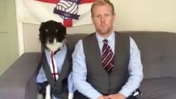 5 Cute Animals To End The Week: Dog Channels Gareth Southgate And Corgis