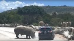 El video del rinoceronte nos hace preguntarnos ¿está bien ir a un