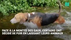 Ces chiens abandonnés pendant l'ouragan Florence échappent de peu à la