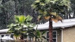 ¡Está nevando en Florida y la gente lo