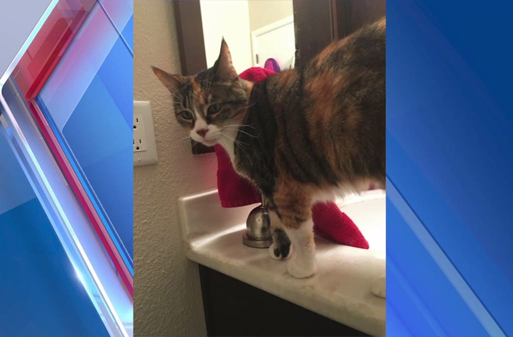 Cat?s dismembered body found scattered around neighborhood