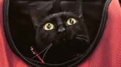 """""""Una favola d'integrazione"""". Storia di Milo, il gatto nero e disabile che non riesce a saltare (di G."""