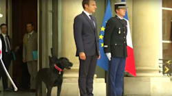 French First Dog Nemo Attends First Official