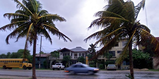 Palms blow in the heavy wind and rain from Tropical Storm Chantal, Aug. 21, 2001 in the town of Corozal, Belize.