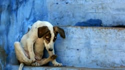 Army Officer Beats 3 Stray Dogs To Death In Dehradun, Activists Seek