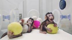 Sulla clonazione non si può più fare come le tre