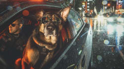 Vancouver Police's New Dog Calendar Looks Like 12 Months Of Pure