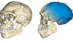 L'Homo sapiens è più vecchio di 100.000