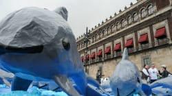 La vaquita marina: víctima de malas decisiones