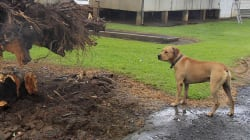 What To Do With Your Pets Before Cyclone Debbie