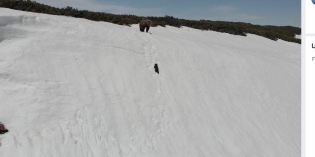 雪の崖をよじ登る子グマ