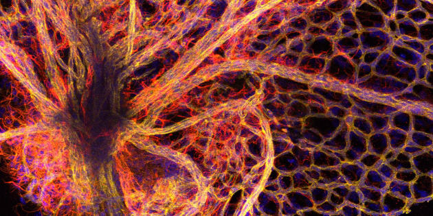 Part of the blood vessel network found in the retina of the eye.
