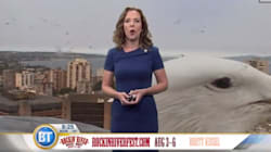'Giant' Seagull Photobombs Vancouver Weather