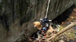 WATCH: Engineer Saves Puppy Using