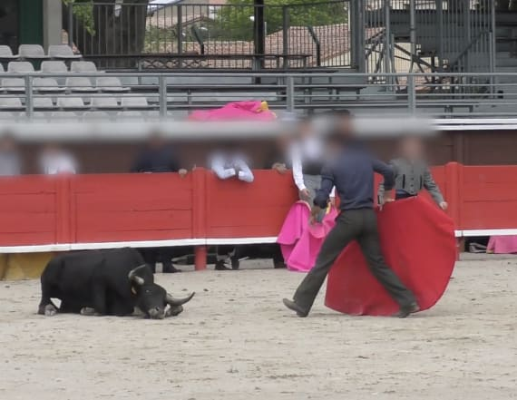 Shocking video shows bull dying as children watch